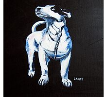 Chaos, Bull Terrier Photographic Print