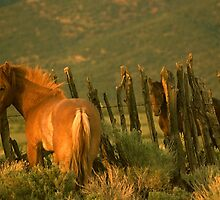 Mustang Country by Jeanne  Nations