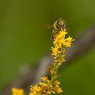 Pollen camo by Sean McConnery