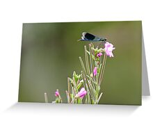 Banded Demoiselle  Greeting Card