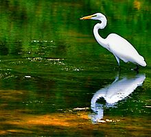Egret Fishing by Monte Morton