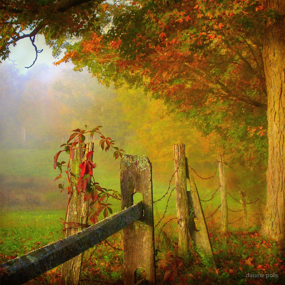 farm fence by dawne polis