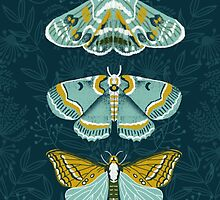 Lepidoptery No. 8 by Andrea Lauren  by Andrea Lauren