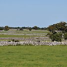 The Stone Fences of Galway, Ireland by Pat Herlihy