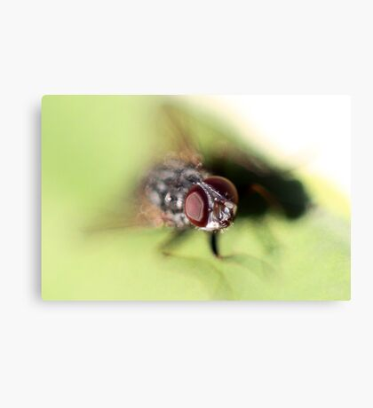 Eye of the Fly! Canvas Print