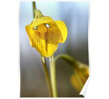 Golden Moth 2 (Diuris chryseopsis)  Poster