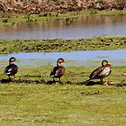 Do You Have Your Ducks in a Row? by Barb Miller