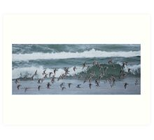 Seagulls-Newport Beach, Oregon Art Print