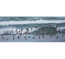 Seagulls-Newport Beach, Oregon Photographic Print