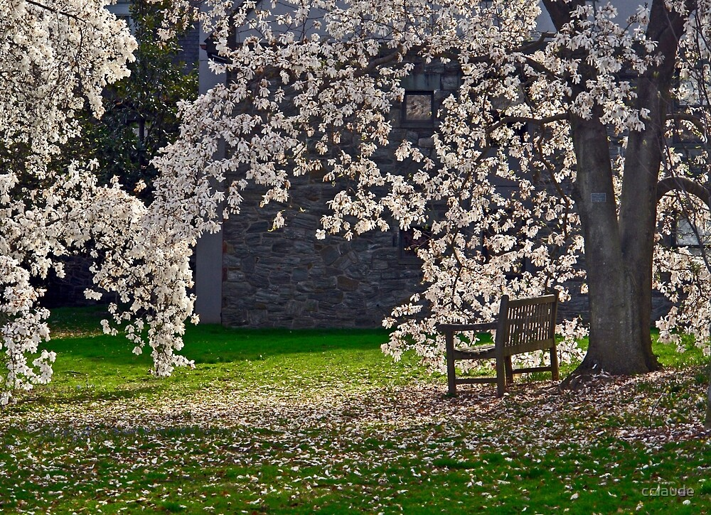 Under the Magnolia Tree by cclaude