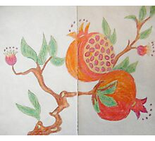 Pomegranate - Sketch Book Project Photographic Print
