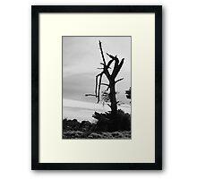 Desolation - Mornington Framed Print