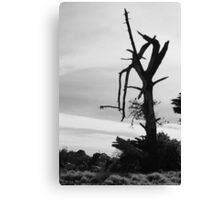 Desolation - Mornington Canvas Print