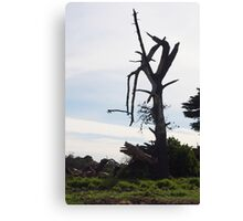 Desolate - Mornington Canvas Print