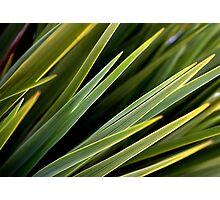 Green tranquilaty  Photographic Print
