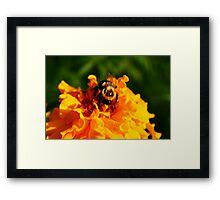 BEES KNEES Framed Print