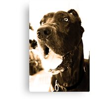 "Samson the Great ""Dane"" Canvas Print"