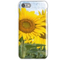 Field of yellow sunflowers iPhone Case/Skin