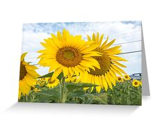 Field of yellow sunflowers Greeting Card