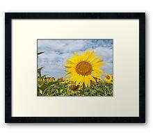 Golden sunflower flowers Framed Print