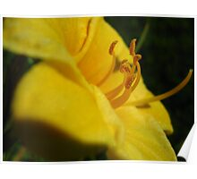 Sunny Stamens Poster