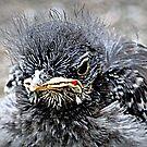 Baby Bird by saseoche