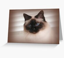 Catching Coco  Greeting Card