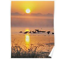 The Flock on a Steamy Morning Poster