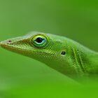 Simply Green by Dennis Stewart