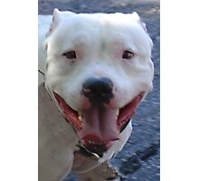 Pit Bull Pretty Photographic Print