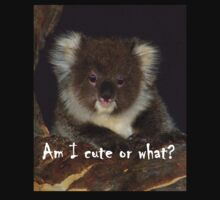 Koala, How cute am I? by Adam Cole