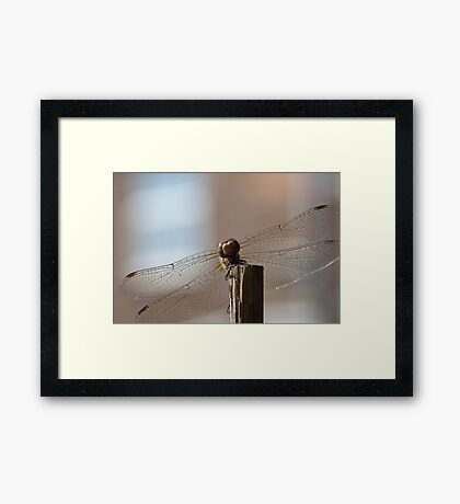 Smile with a face like this! Framed Print