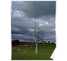 Barren Tree Poster
