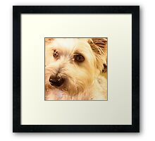 Sweet Puppy Framed Print