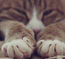 Paws by SarinaGito