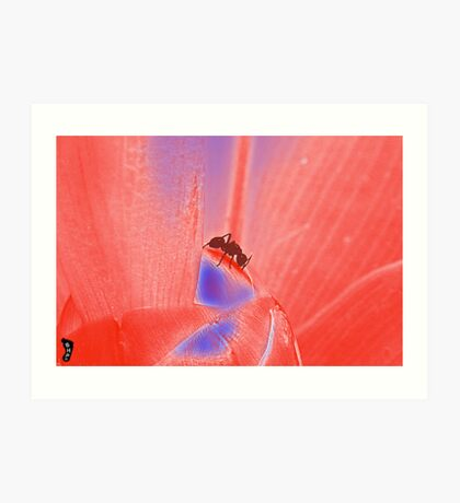 "Ant Flower ""Red Exposure""  Art Print"