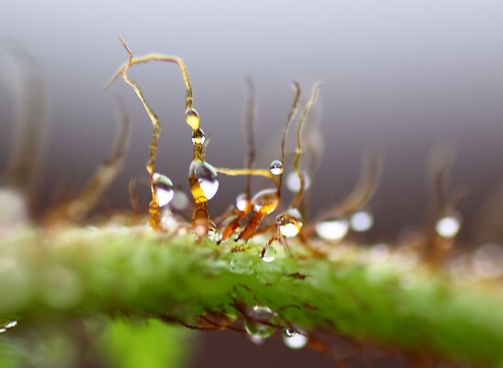 Dewdrops on Fern by yolanda