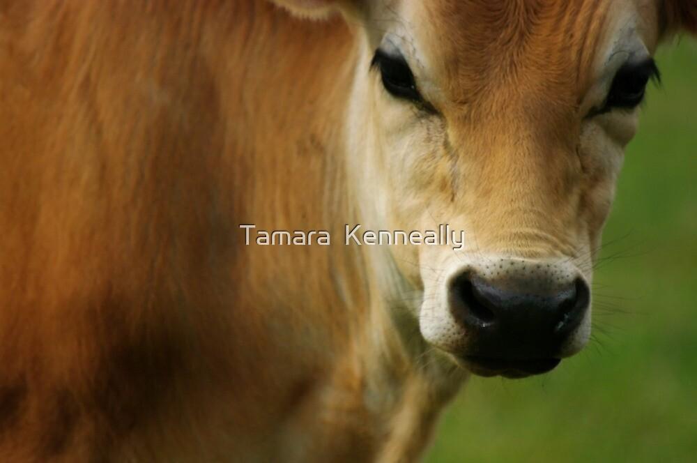 Hansel by Tamara  Kenneally