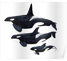 Orca trio: male, female and baby Poster