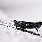 grasshopper by Jen Wahl