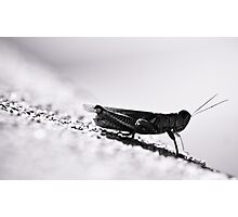 grasshopper Photographic Print