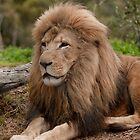 King of Werribee Zoo by Tom Newman
