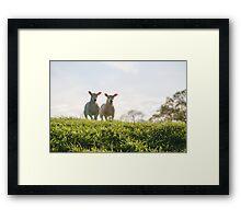Farnley Sheep Framed Print