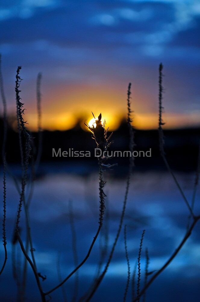 Winter's Last Light by Melissa Drummond