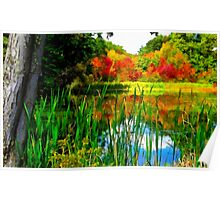 Early autumn pond Poster