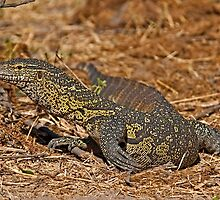 Nile Monitor Lizard (Varanus niloticus) by Konstantinos Arvanitopoulos