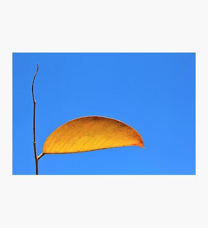Golden Leaf - Simplistic Natural Beauty Photographic Print