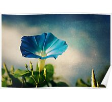 Hello Morning Glory Poster