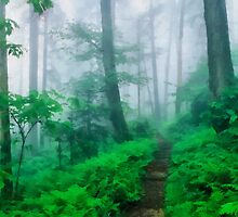 Foggy Appalachian Trail by rok-e