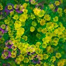 Yellow, Purple and Green Cornucopia by mrthink